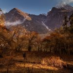 Autumn forest with beautiful sunset views over manaslu mountain range-15 days of mansalu trek.